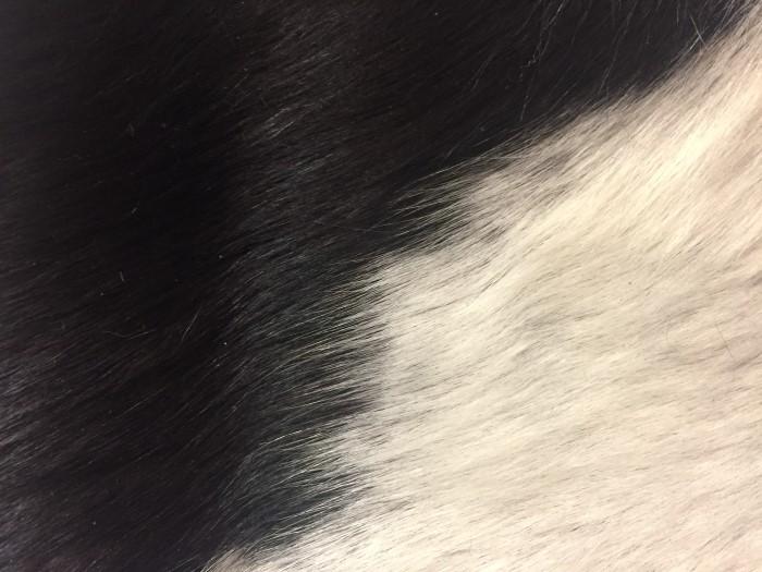 Cow (Custom)