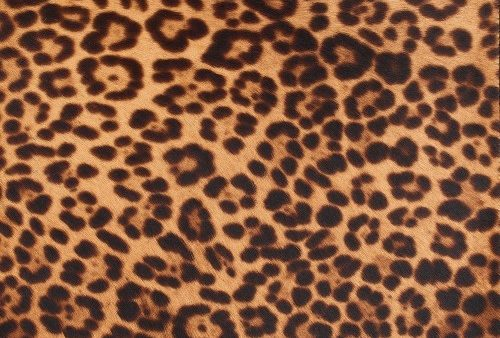 horsy-9017-white-miami-leopard-4418-nuance-beige (Custom)